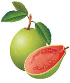 Vector image of a guava