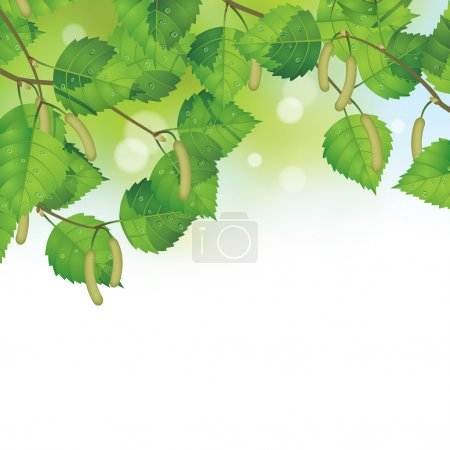 Birch leaves background