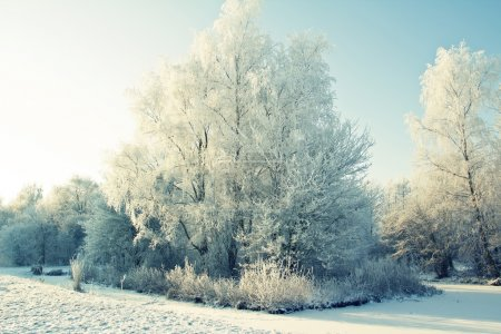 Photo for A beautiful Dutch winter landscape with pretty white trees - Royalty Free Image