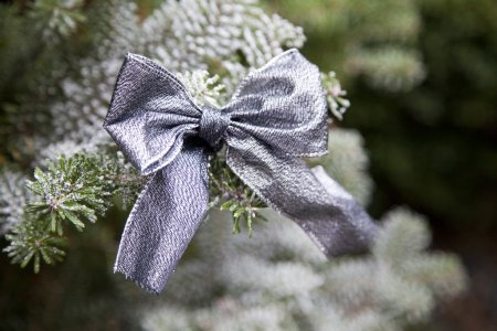 Photo for Close up from a ribbon on a christmas tree with snow - Royalty Free Image