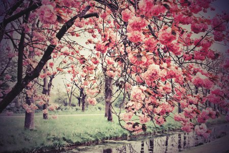 Photo for Blossoms - Royalty Free Image