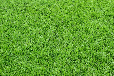 Photo for Natural spring green grass texture background from a soccer field - Royalty Free Image