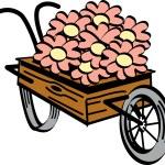 Old fashioned wooden wheelbarrow with pretty daisy...