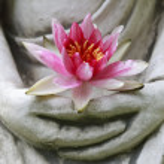 Buddha hands holding flower, close up...