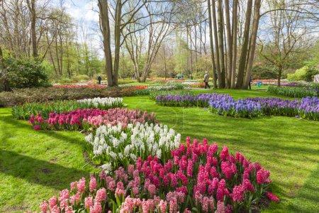 Photo pour Fleurs en fleurs à Keukenhof Garden, Lisse, Pays-Bas - image libre de droit