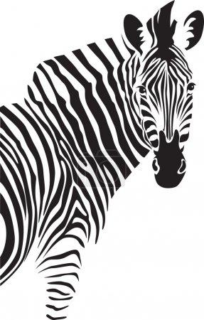 Illustration for Zebra. Vector illustration - Royalty Free Image