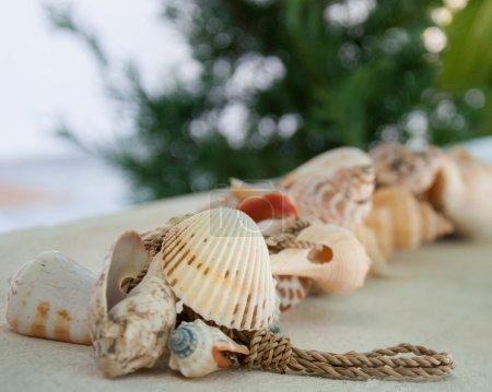 Photo pour Coquillages de mer colorés, faible profondeur de champ - image libre de droit