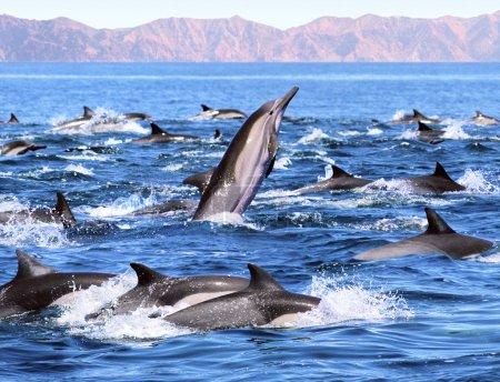 Dolphin Patrol