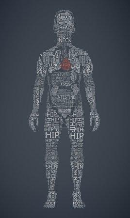 Human body wordcloud
