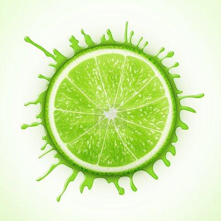 Fresh lime with splash eps10 vector illustration...