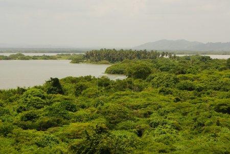 Photo pour Forêt tropicale en sens inverse dans les eaux, sur le rio negro, dans le bassin du fleuve Amazone, Brésil, Amérique du Sud - image libre de droit