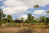 Peru, Peruvian Amazonas landscape. The photo present typical ind