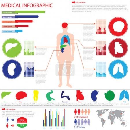Illustration pour Infos médicales graphiques-Corps humain avec organes internes - image libre de droit