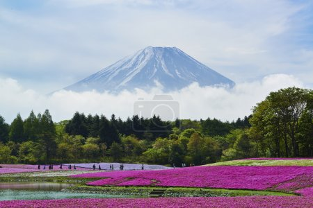 Pink moss flowers and Mount Fuji in japan