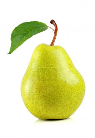 Photo for Pear, pear fruit, pear isolated white backgroundpear, pear fruit, pear isolated white background, pear on white, asian pear, pear garden - Royalty Free Image