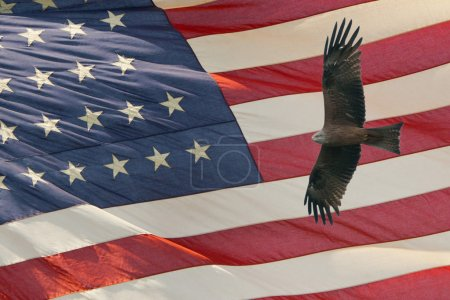 Eagle on star and stripes flag background