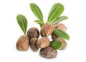 Gruppe von Shea-Nüsse und Blätter