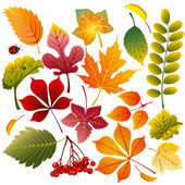 Collection of various autumn leaves wonderful elements to your design