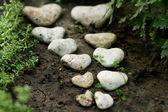 Mořské kameny ve tvaru srdce
