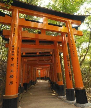 Torii - Fushimi Inari Taisha - Kyoto - Japan