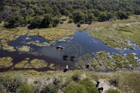 Aerial view of Elephants - Okavango Delta - Botswana