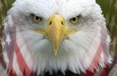 """Постер, картина, фотообои """"Соединенные Штаты Америки - патриотизм"""""""