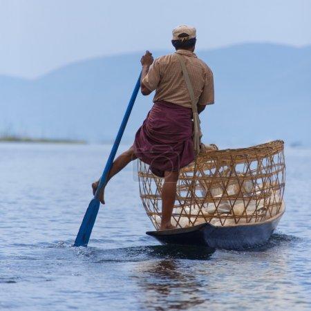 Photo pour Une jambe à l'aviron des pêcheurs sur le lac inle dans l'Etat shan dans le style unique de myanmar (Birmanie) .cette d'aviron a évolué car le fond de lac peu profond est couvert de roseaux et de plantes rend difficile de voir les poissons en position assise. debout donne une meilleure vue. - image libre de droit