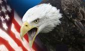 """Постер, картина, фотообои """"Соединенные Штаты Америки"""""""