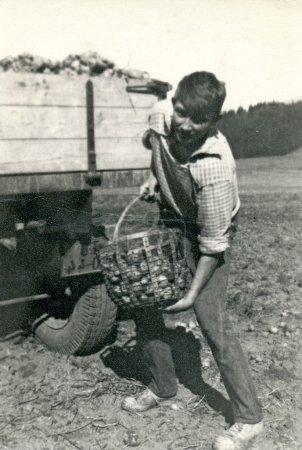 Young man on a potato brigade