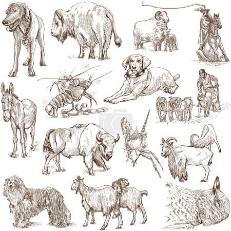 Photo pour Animaux du monde entier (set blanc no. 5) - une illustration dessinée à la main (pleine grandeur ). - image libre de droit