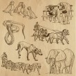 Animals around the World (vector pack no.11). Coll...