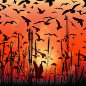 Vector landscape with sunrise flying birds and grass