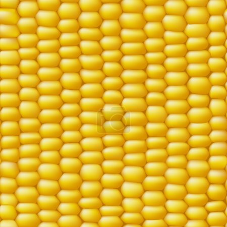 Corn vector seamless realistic texture