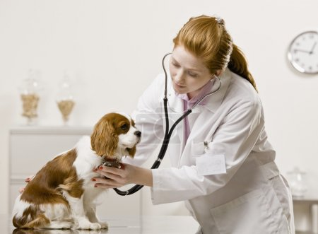 Young Female Veterinarian