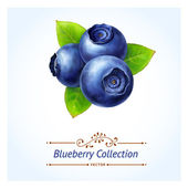 Blueberry leaves and berries