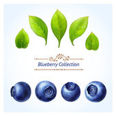 Blueberry set
