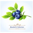Blueberry branch, leaves and berries isolated on w...