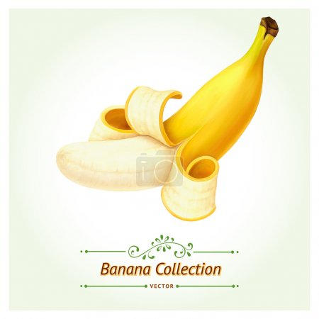 Illustration for Version of Banana fruit. Isolated on white background. Realistic digital paint. - Royalty Free Image