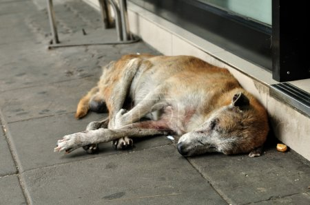 Homeless stray dog sleeping
