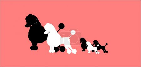 Poodle family