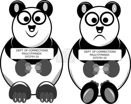 Vector illustration - busted panda mug shot