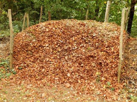Photo pour Tas de compost plein de feuilles d'automne - image libre de droit