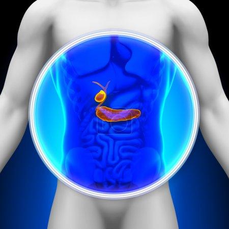 Photo pour Radiographie médicale - pancréas vésicule biliaire - image libre de droit