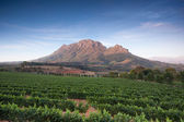 Stellenbosch, the heart of the wine growing region in South Afri