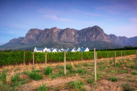 Stellenbosch, the heart of the wine growing region in South Afri
