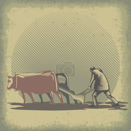 Bulls and harrow