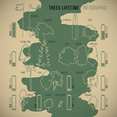 Tree lifetime infographic of duration of life various types of trees with proportionate schematic silhouettes and symbolic duration measurement vector