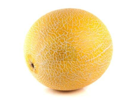 Photo pour Melon mûr isolé sur fond blanc - image libre de droit