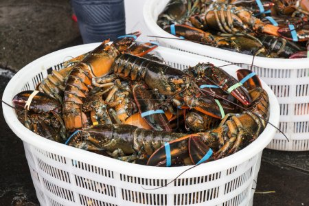Fresh Lobster in Seafood Market