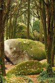 Green forest trees with huge rocks